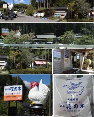 20130502asuke_hananoki
