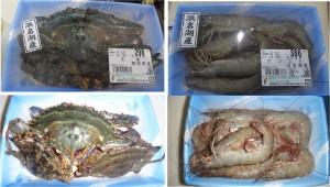 ★購入商品 20140726浜名湖産 ワタリカニとボソエビ