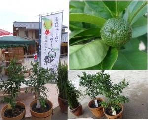 ●20120812花の窟 お鯛茶屋 新姫と古代米 (5)