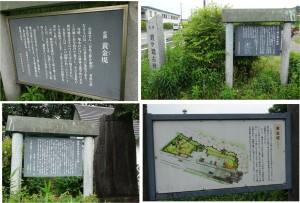 ◇20150516黄金堤(西尾市吉良町) (10)