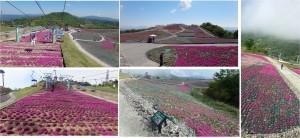 ◆芝桜の丘 リフトより撮影 茶臼山20150521