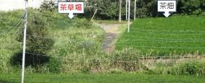■■20150912茶草場 (7)