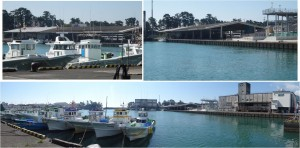 ◆用宗漁港と市場20150912 (8)