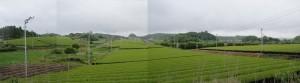 ★遠景茶畑20120609高天神城址(静岡県掛川市大東町) (36)