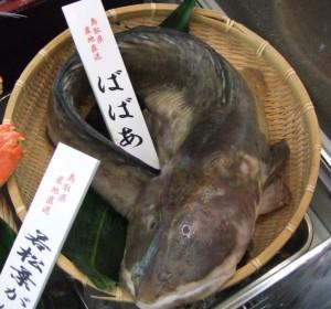 20070308リョーショクチルド展示会・鮮魚・ばばあ-1