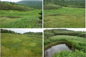 ◆花畑-4 浮島湿原20160723 (10)
